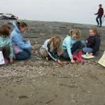 Le coffre de Faldido | Recherche sur la plage